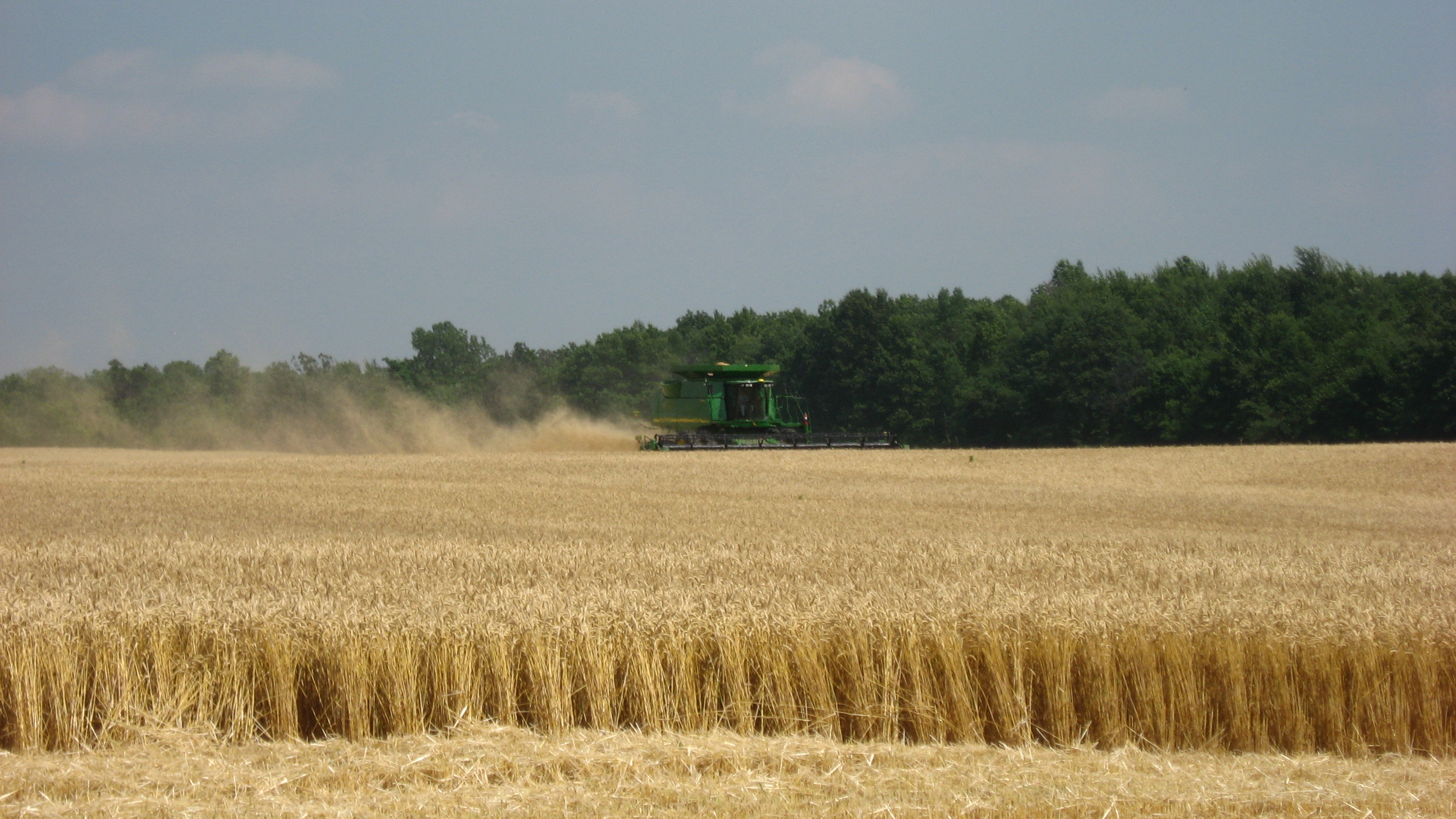 Wheat_harvest_in_Richmond_Township